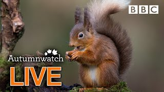 Cute wildlife cams UK 30 Oct  | BBC Autumnwatch