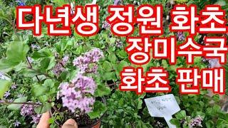 야생화 다년생 노지월동 베란다 화초 반려식물 공기정화식…