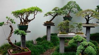 выращивание бонсай в домашних условиях. Часть 1