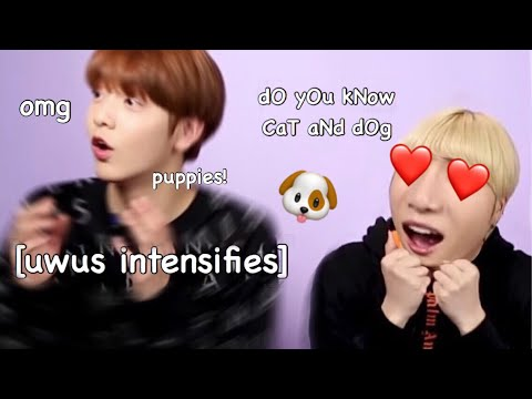 things-you-didn't-notice-during-txt's-interview-with-buzzfeed-(ft.-puppies)