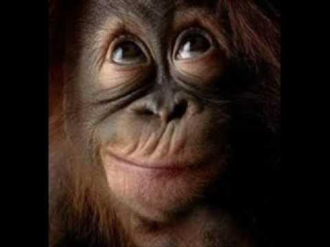 Paolo Conte * Macaco mp3