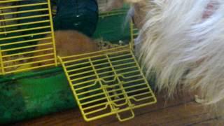 Meet my hamster taylor♡