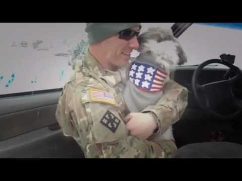 18 Dogs Welcoming Soldiers Home Compilation 2012   YouTube