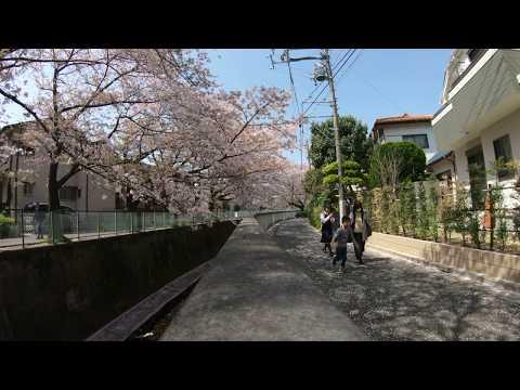 20180401 - Tokyo: Suginami
