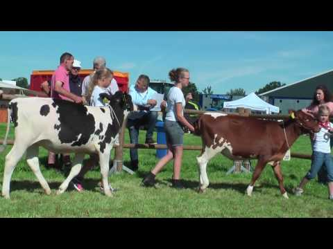 Jongveedag  Peel en Maas 2016 voormiddag