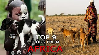 9 Dog Breeds from Africa