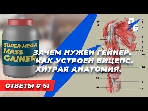 Бицепс и его странная анатомия. Зачем нужны гейнеры в бодибилдинге. Ответы 61