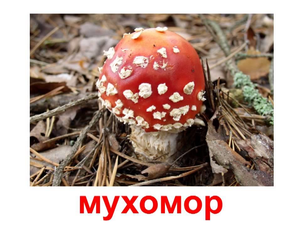 Скачать видео о грибах