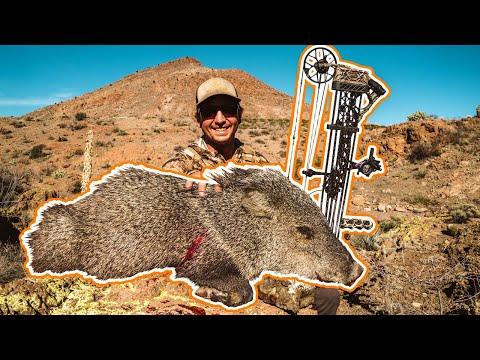 Arizona OTC Archery Mule Deer Hunt | BOWHUNTING JAVELINAS | Part 2