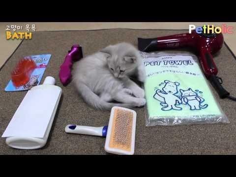 [고양이 관리] 털 관리 제2부 - 목욕 시키기 - [