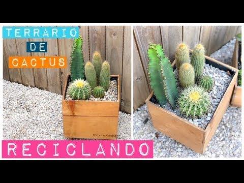 Terrario De Cactus Reciclado Una Caja De Madera Youtube