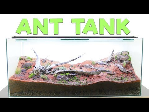 How to Build an Ant Farm | Natural Formicarium