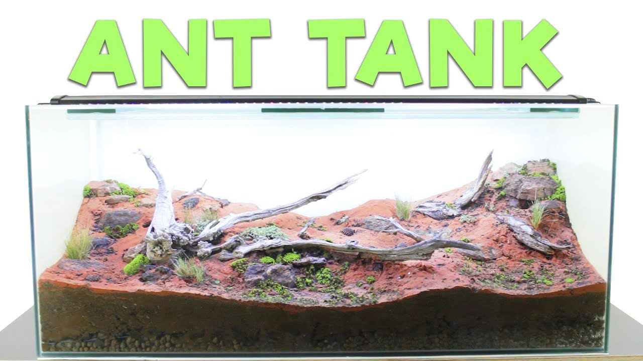How To Build An Ant Farm Natural Formicarium Youtube