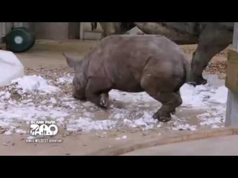 Крошка носорог впервые видит снег смотреть онлайн видео от Я снимаю    в хорошем качестве