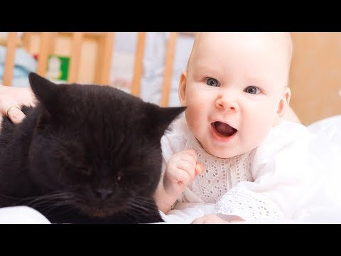 Best Babies Laughing Hysterically at Cats Compilation (2017)
