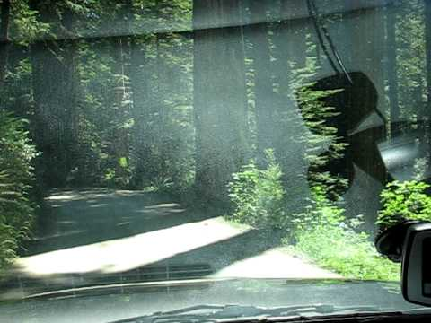 Drive threw the Redwood Forest