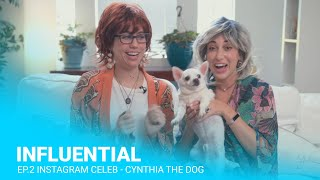 Influential: Instagram Celebrity - Cynthia the Dog