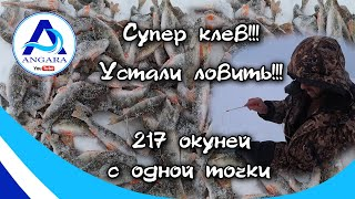 Супер клёв окуня Зимняя рыбалка Рыбий жор