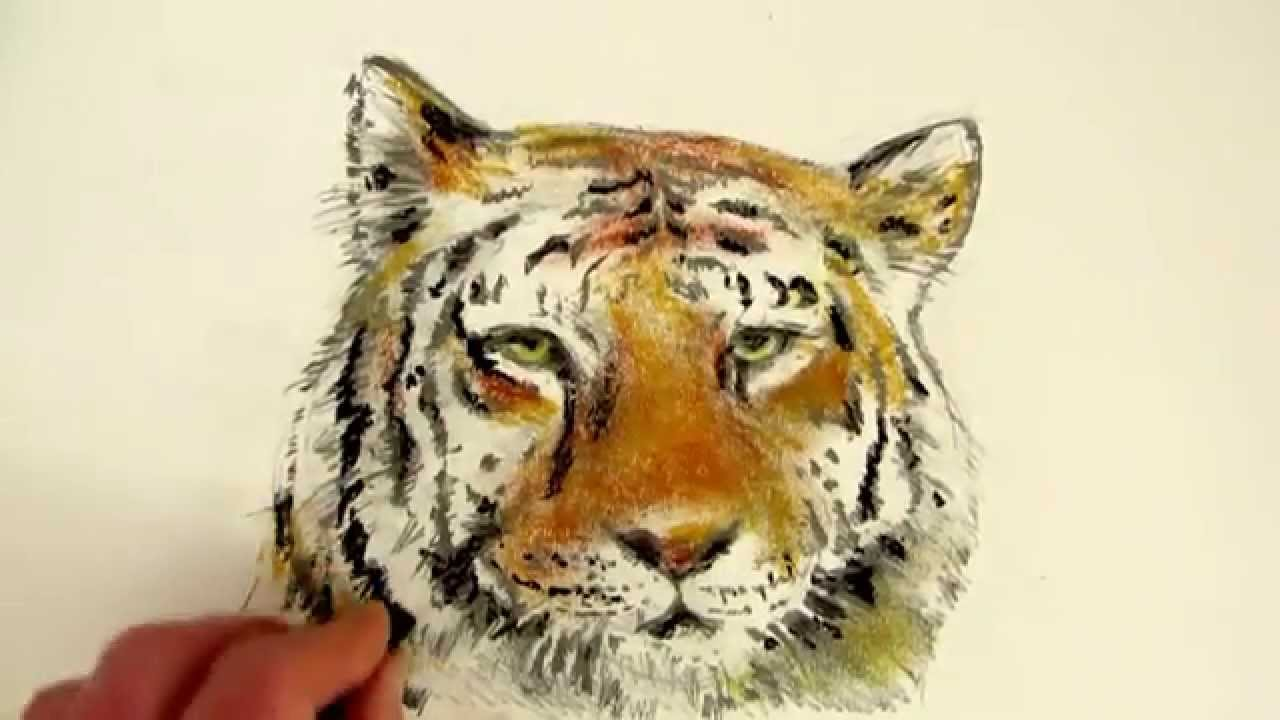 how to draw a tiger head step by step