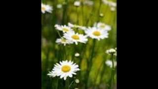 Video Papatya Gibisin Beyaz ve İnce   & Secaattin Tanyerli (TANGO) download MP3, 3GP, MP4, WEBM, AVI, FLV Juni 2018