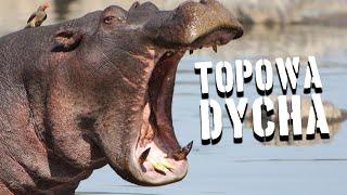 10 najbardziej zabójczych zwierząt [TOPOWA DYCHA]
