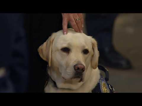 Service dog 'Sully H.W. Bush' visits Bush 41 at the Capitol Rotunda