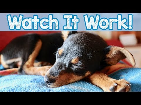 Watch it Work! – Watch More Dogs Sleeping to Relax My Dog Music! 4 Million Dogs Helped Worldwide!