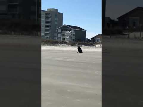 Joey Brooks - Darth Vader Is In Myrtle Beach