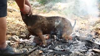 Cooking Full Goat Roast  with smoke TADKA (India)
