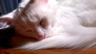 Cute cat peacefully sleeping
