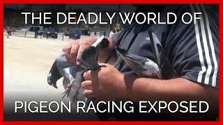 Graveyard Races: A PETA Undercover Investigation