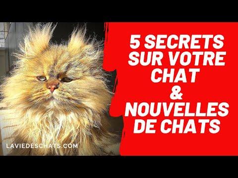 Cinq Secrets Sur Votre Chat 😸& Nouvelles De Chats
