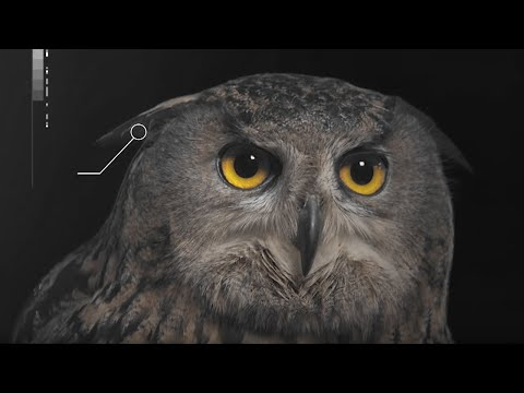 How Does An Owl's Hearing Work? - Super Powered Owls - BBC