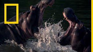 أشرس الكائنات في العالم أنهار الموت   ناشونال جيوغرافيك أبوظبي