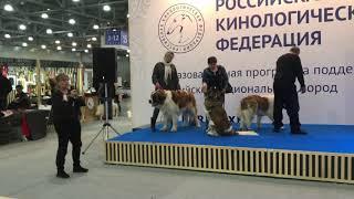 Презентация породы Московская сторожевая