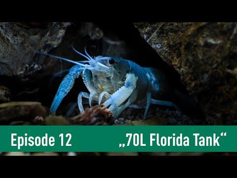 70 L Scaper's Tank für einen blauen FLORIDA FLUSSKREBS | Kochstudio Episode 12 | DENNERLE