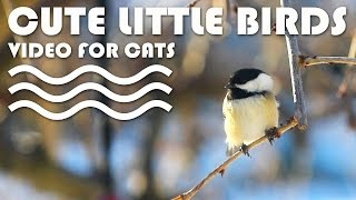 BIRD VIDEO FOR CATS - Cute Little Birds for Cats to Watch.
