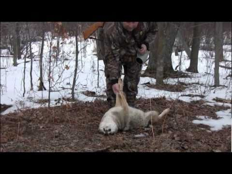 Hesperia Michigan Coyote Hunt...