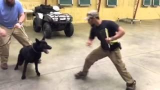Nacho Civil German Shepherd Dog For Sale