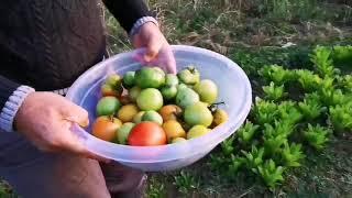 Köydeki Bahçemizin Hali Sonbahar Manzara