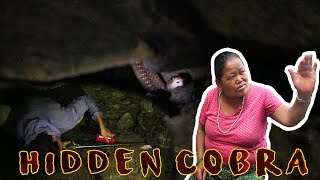 Cobra We Couldn't Rescue | Pokhara | Rohit Giri