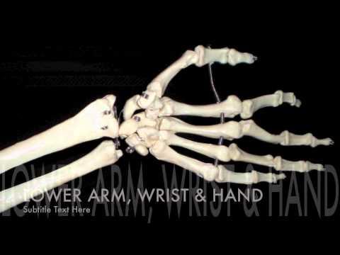 Major Bones of the Body