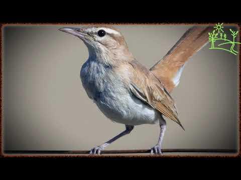 Вопрос: Голос какой птицы связывают скотоводы Тувы с концом зимовки, почему?