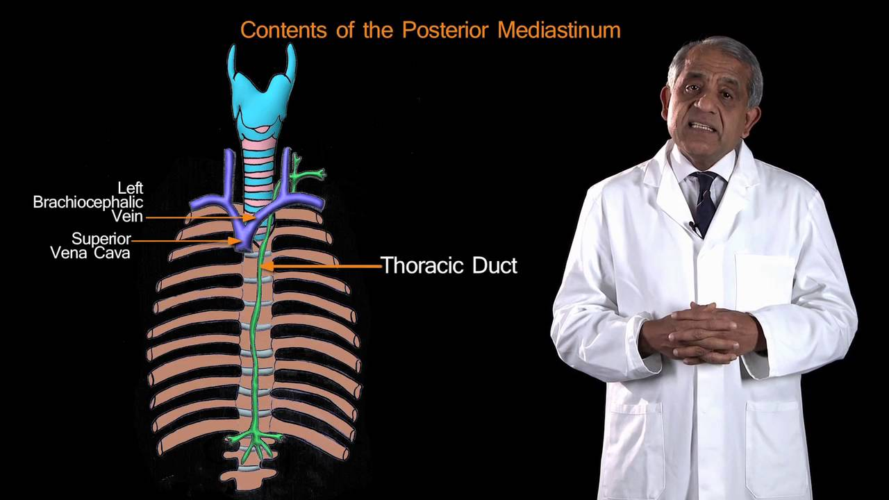 Funky Anatomy EXAM QUESTIONS Posterior Mediastinum - YouTube