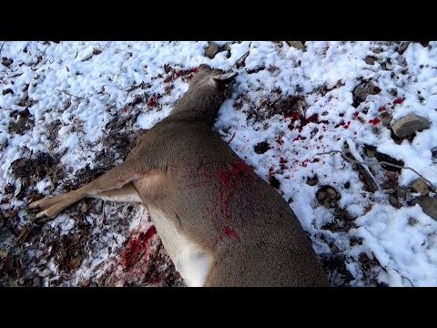FLINTLOCK DEER HUNTING 2020 - .45 Thompson Center Hawkin - Late Season Whitetails Pennsylvania