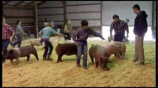 Pickens County Georgia 4-H & FFA Hog Show