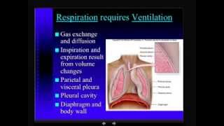 Anatomy - Respiratory System - Part 3