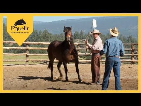 Problem Horses - Spooking