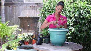 How to Companion Plant Tomato & Dill : The Chef's Garden