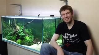 Аэрация в аквариуме. Всё, что нужно знать новичкам